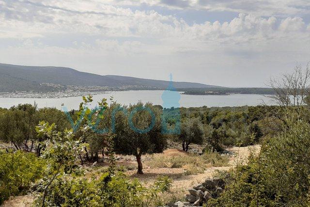 Grad Krk, okolica, stari maslinik sa prekrasnim panoramskim pogledom na more
